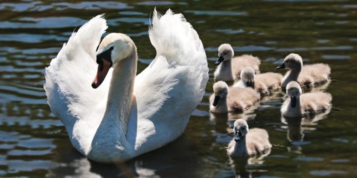 the-choice-of-motherhood